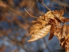 autumn_leaves_27359